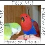Feed Me Tweet Me Follow Me Home Friday