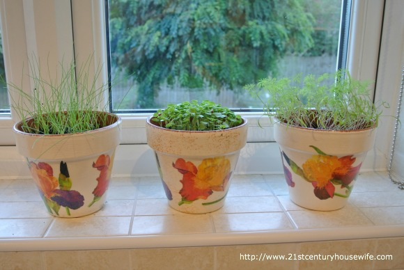 Growing herbs on window sill