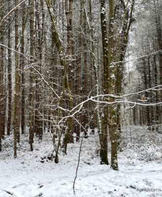 A Snowy Day in the forest