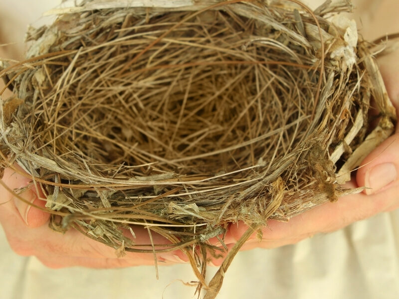 Finding Yourself Again in after the kids leave home - an empty nest